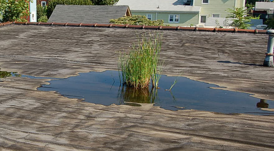Symptoms Of A Commercial Roof Leak Right Way Roofing Blog